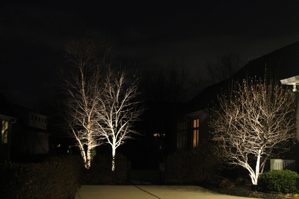Landscape Tree Lighting