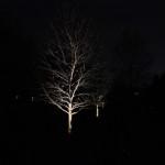 outdoor-lighting-midwest-lightscapes-landscape-lighting-home-outdoor-lighting-services-tree-lightings