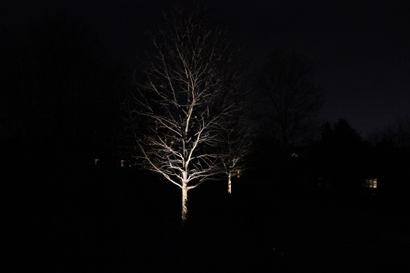 Tree Up Lighting